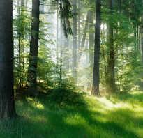 Звуки дневного леса — пение птиц, звуки ручья и насекомых